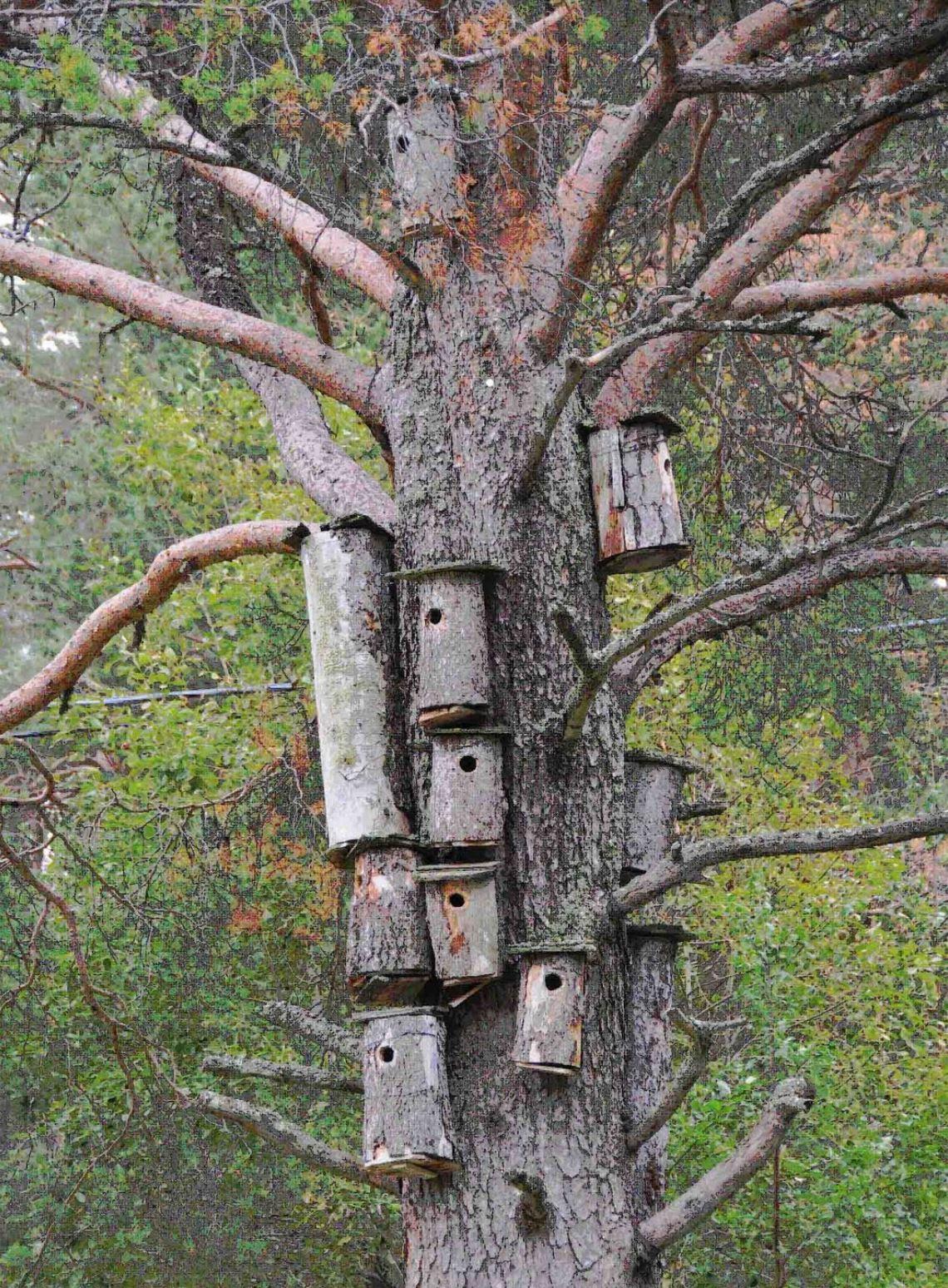 Gierzwaluwnestkasten in boom Hakkas Zweeds Lapland